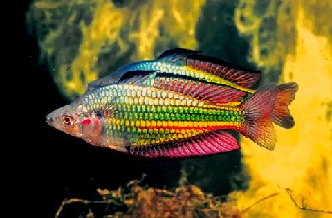 Clockwork hare fish of my dreams for Well water for fish tank